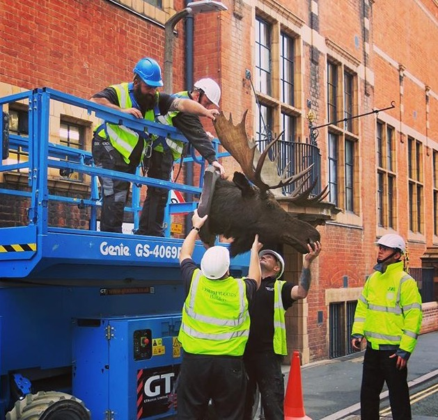 Moose head retrieved on scissor-lift