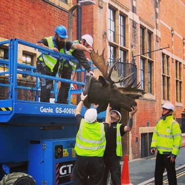 Moose head retrieved on scissor-lift